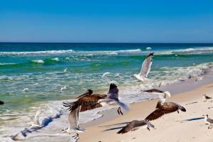 grayton-beach-birds