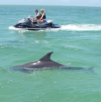 Destin Waverunner Dolphin Tour near our vacation rentals