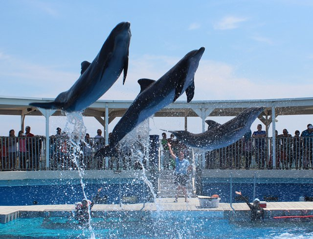 Gulfarium Marine Adventure Park Admission Tickets near our vacation rentals