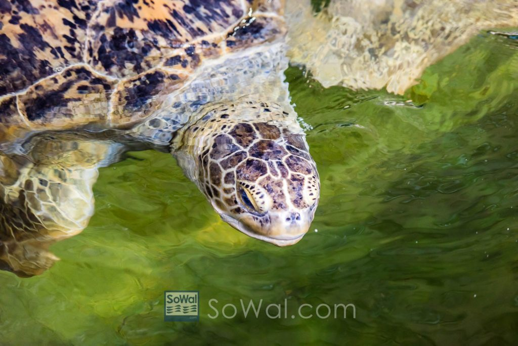 Places to stay / vacation rentals where you can see the turtles in 30A/South Walton, Florida