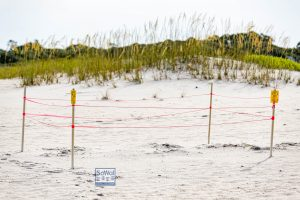 A turtle nest near Dune Allen Beach in 30A FL. Turtle watching is a great family vacation activity.